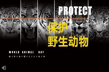 保护野生动物主题班会ppt模板