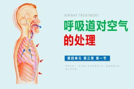 《呼吸道对空气的处理》PPT课件